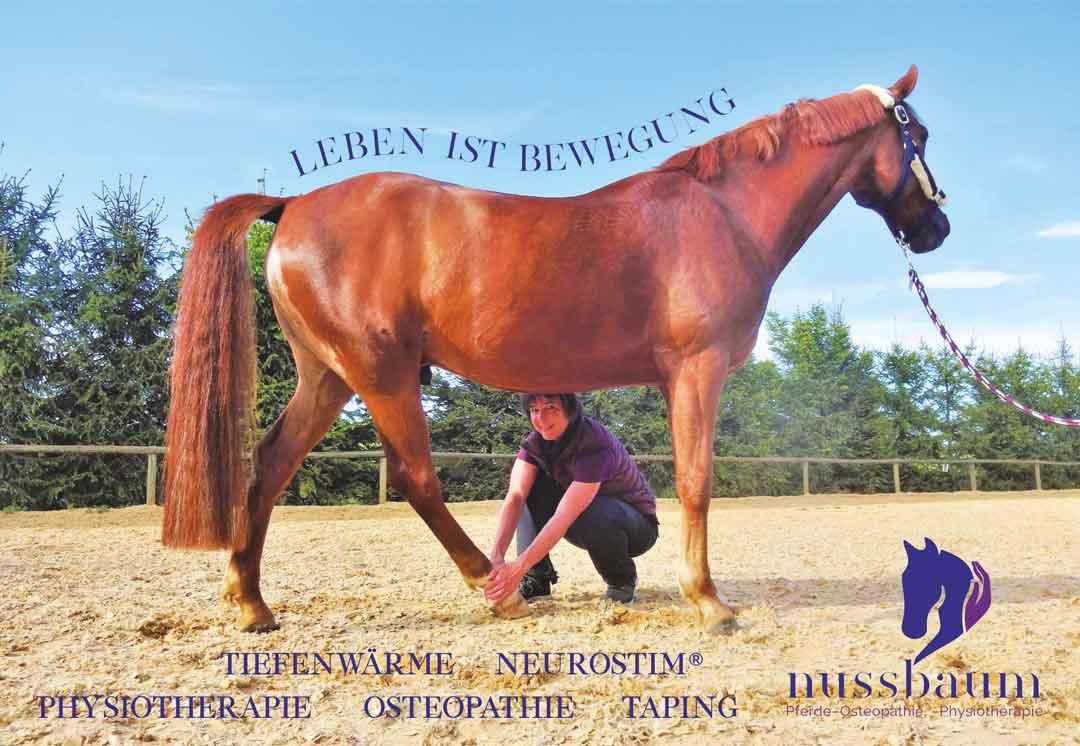 Leben ist Bewegung Pferde-Physio Nussbaum zeigt Pferd mit Heidrun Nussbaum, die sich um ein Bein des Pferdes kümmert
