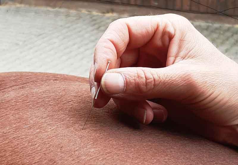 Akupunkturnadel, die mit der Hand auf dem Pferderücken platziert wird